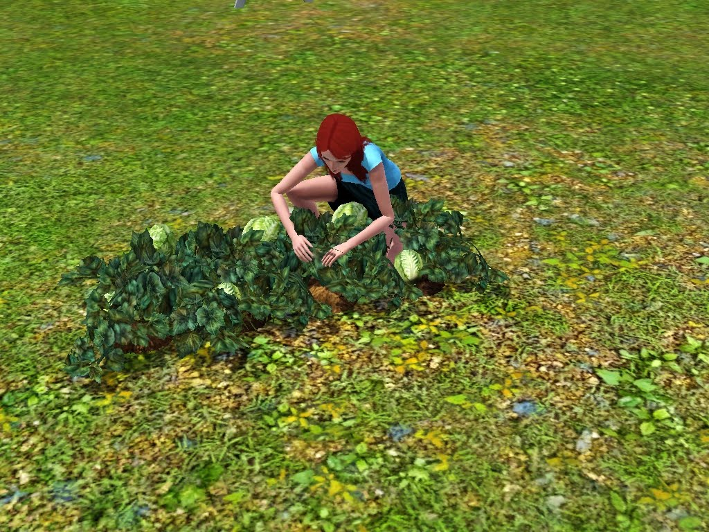 A Sim harvesting lettuce.